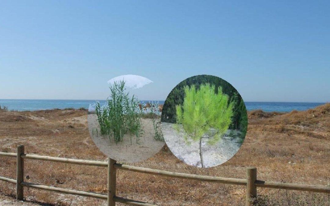 Conservación Dunar