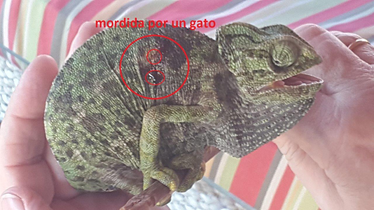 Reptiles | Asociación ProDunas Marbella